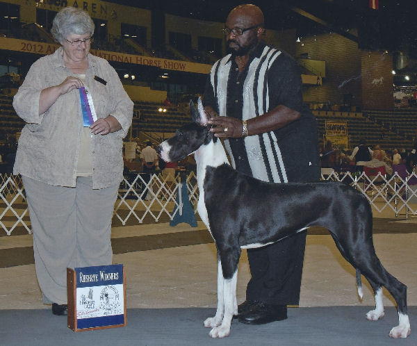diamond mantle in the showring great dane
