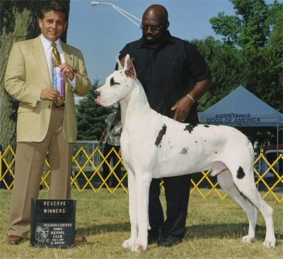 ego great dane stud