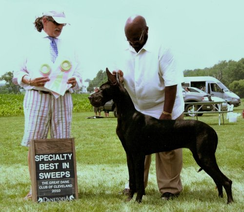 black great dane champion