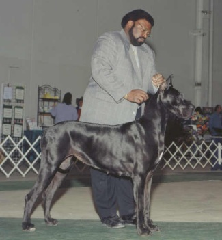 black great dane oprah