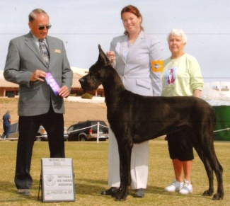 black great dane chamption luther
