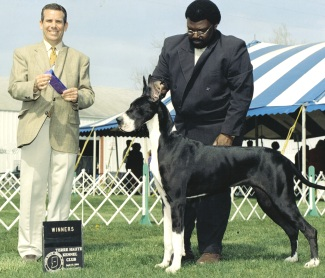 Zenda mantle great dane champion