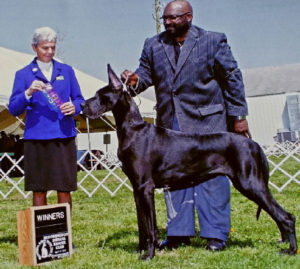 myaang black great dane