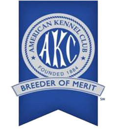 American Kennel Club Award of Merit