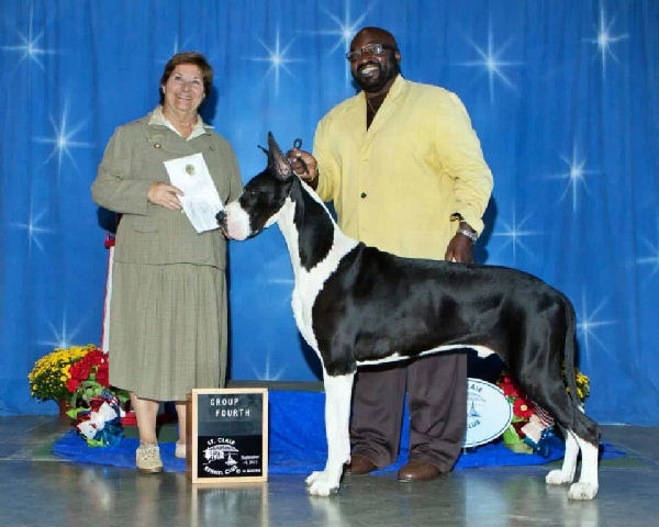 rockymegabucks - champion mantle great dane stud